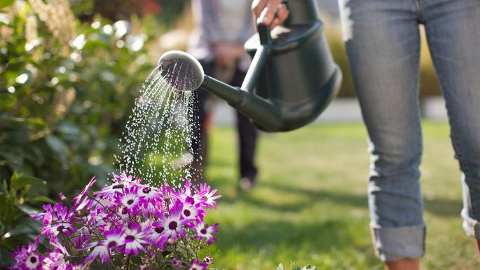 tips for lawn care